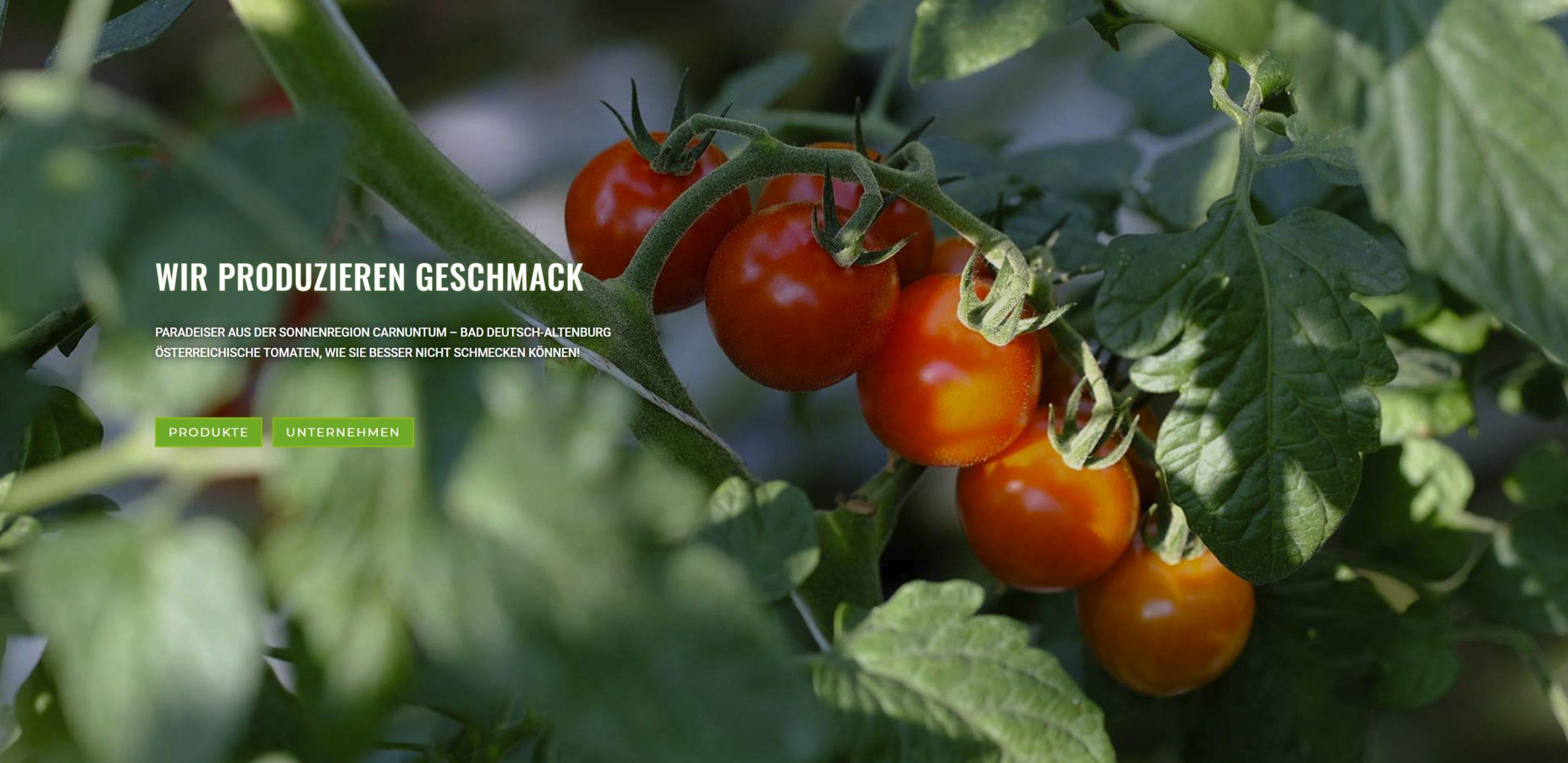 Tomatenproduktion aus Österreich